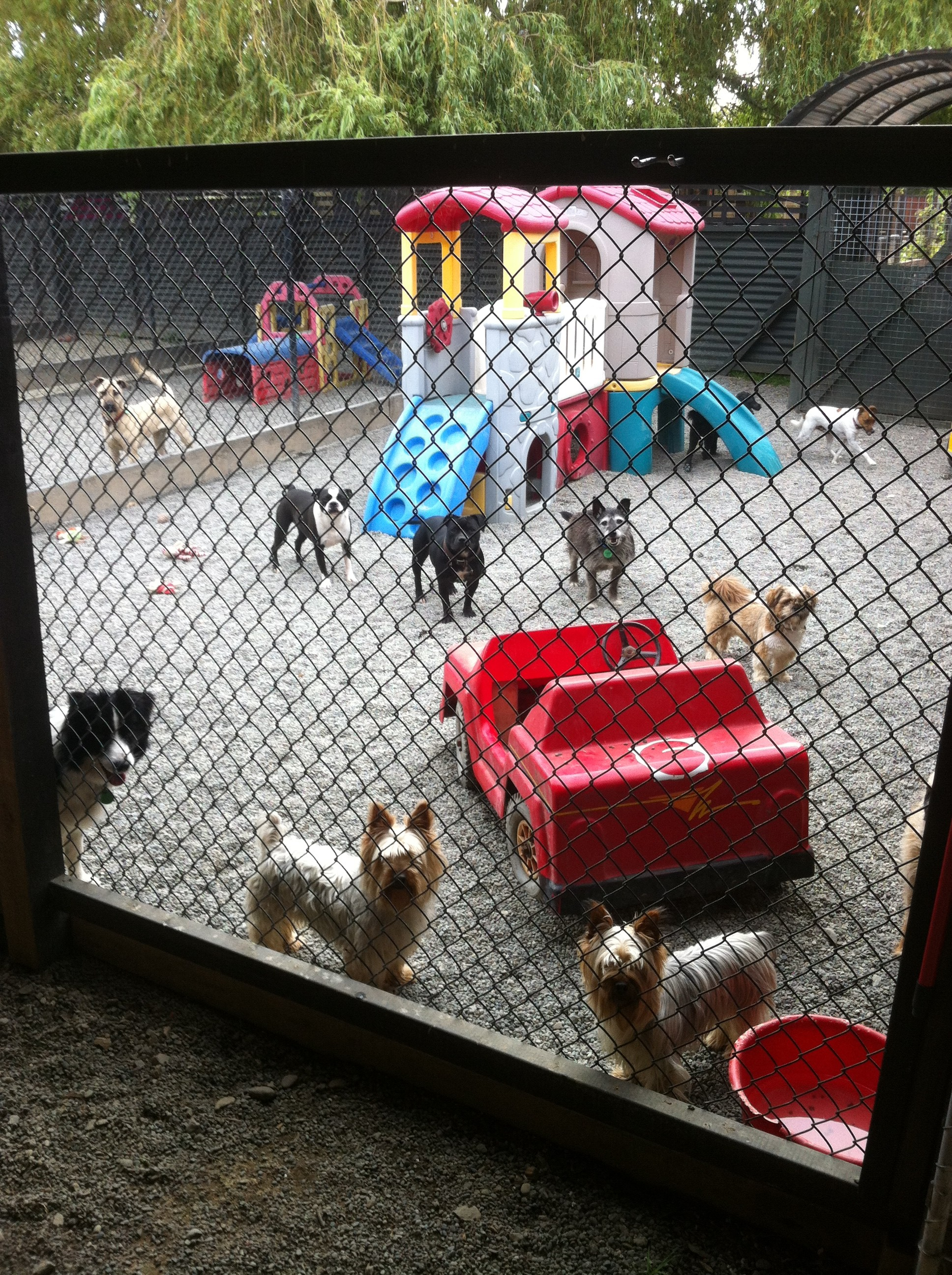 Wags Pet Hotel Levin